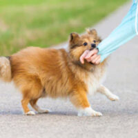 DogBite2